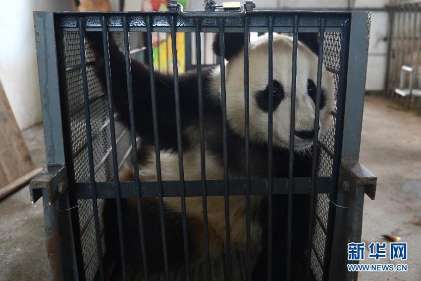 安徽省休宁县皖南国家野生动物救护中心内的