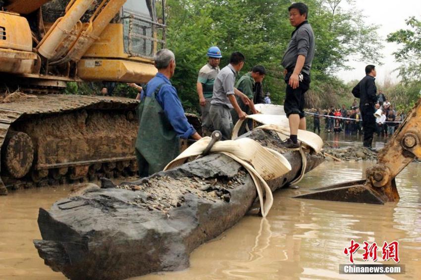 """人员和机械在该县船滩乡船滩村对""""千年乌木""""进行开挖"""