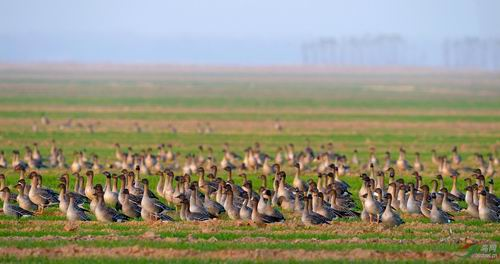 保护候鸟栖息地为宗旨