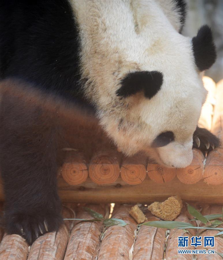 """高清:动物吃""""月饼""""过中秋"""