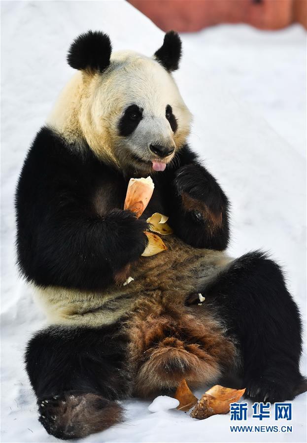 """高清:吉林省动物园内保护动物""""舒适""""过冬"""