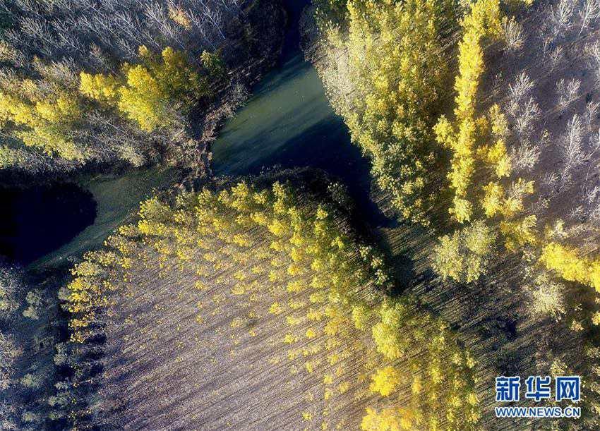 【高清】天津:水库防护林美景如画图片