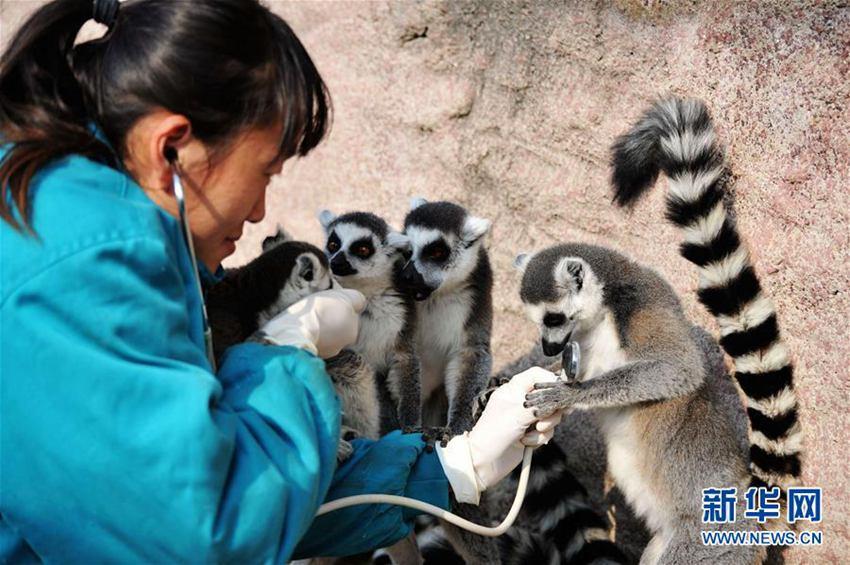 【高清】山东青岛:动物体检过寒冬