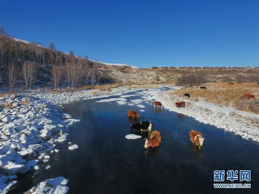 """内蒙古阿尔山市有条严寒中的""""不冻河"""""""