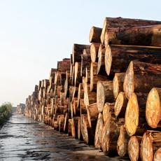 靖江盈利港务多年蝉联全国阔叶材中转单个码头第一名。