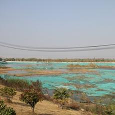 南京浦口七坝港江豚保护区整治后,明春将有新绿长出。