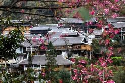 广西:苗山侗寨打造美丽乡村