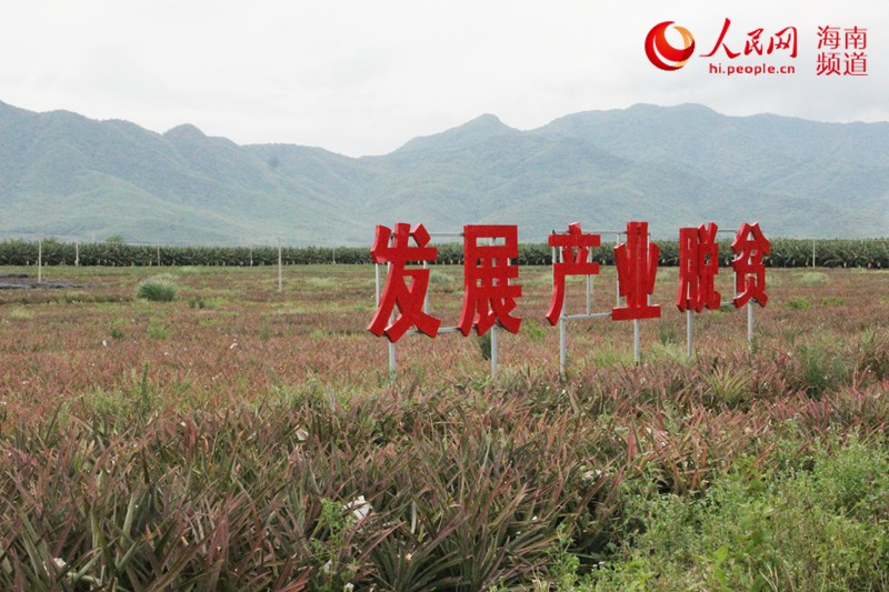 """海南乐东:高效农业助增收 技术产业""""两开花"""""""