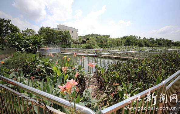 http://www.880759.com/zhanjiangxinwen/9482.html