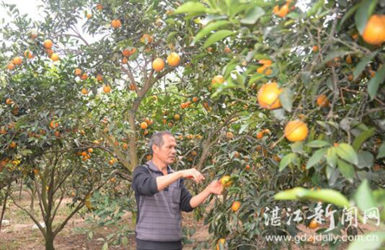 http://www.880759.com/zhanjiangfangchan/16395.html