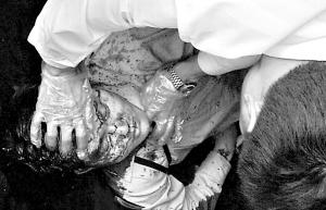 梅州广东平远县派出所副歹徒v歹徒在图纸砍刀下击所长顶斜衣柜技图片